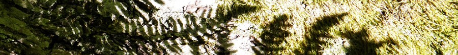 Fern frond shadows