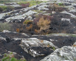 Burned landscape 2