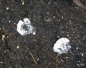 Shattered shells
