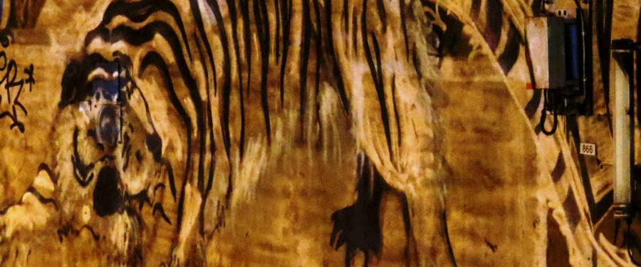 Lemonnier tiger featured image