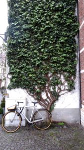 Beguine: Wall with ivy in Large Beguinage, Mechelen