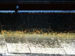 Raindrops in May