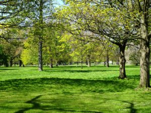 London green: In Kensington Gardens
