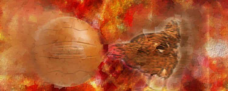 Ghana Christmas ball: Brown hen and football
