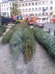 Lockdown: Wrapped Christmas trees