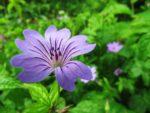 Midsummer flower macro