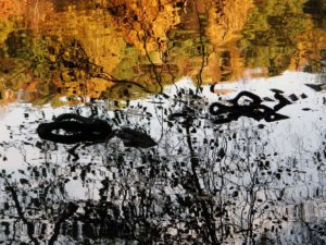 Almost art - Reflected roots