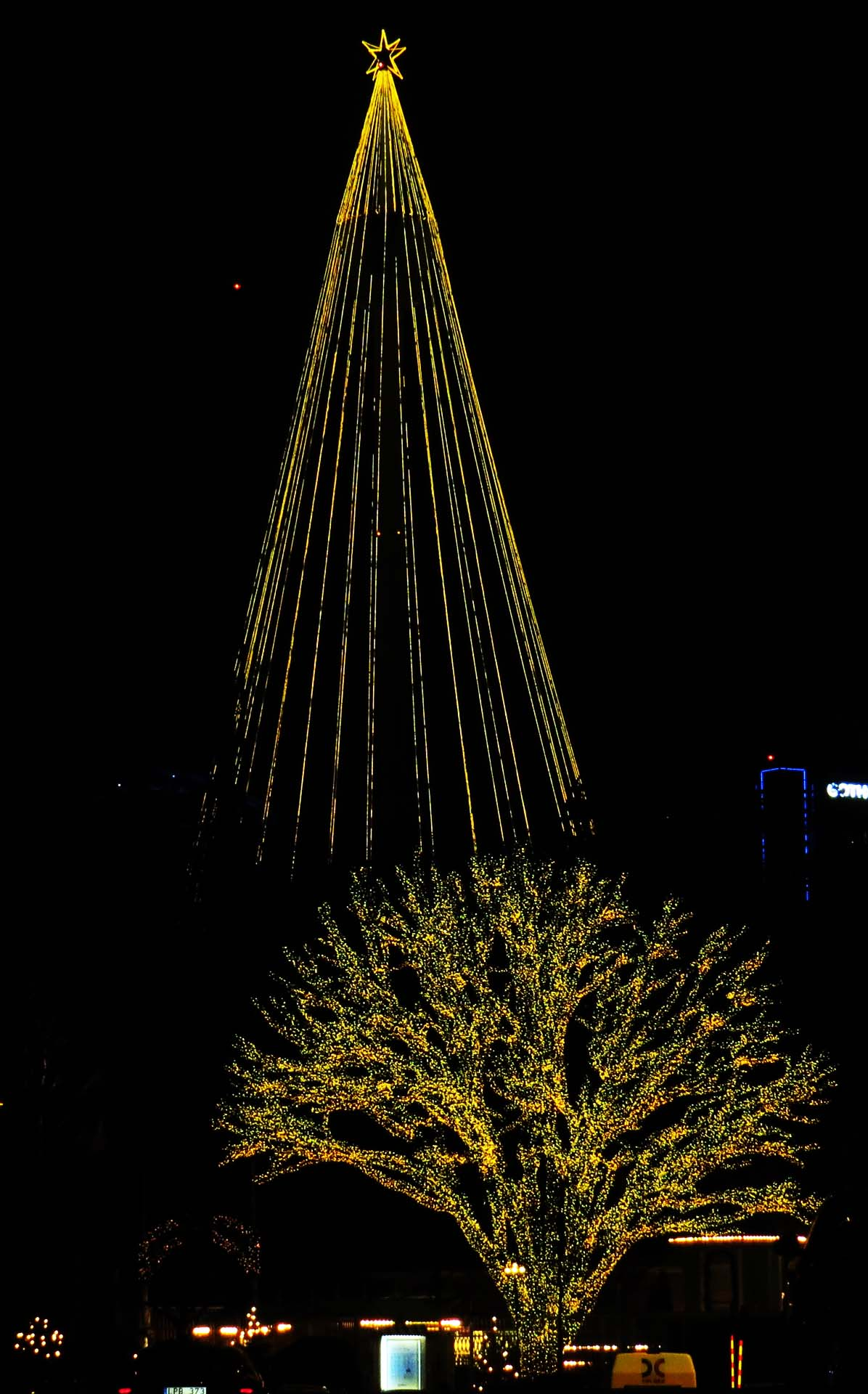 Tree all alight and Liseberg Christmas star