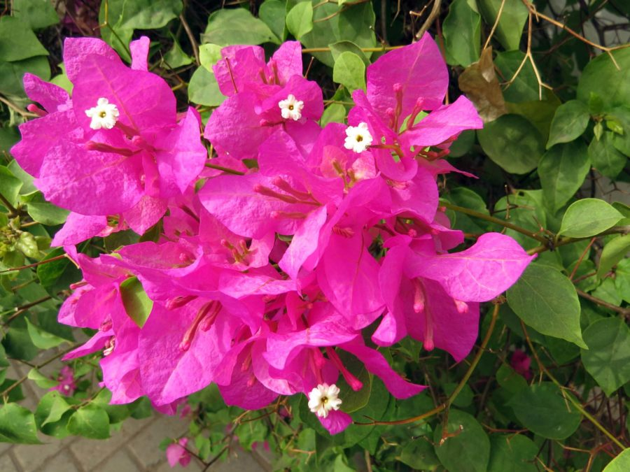 Ghana memories: Flowers in the garden of the first place we stayed