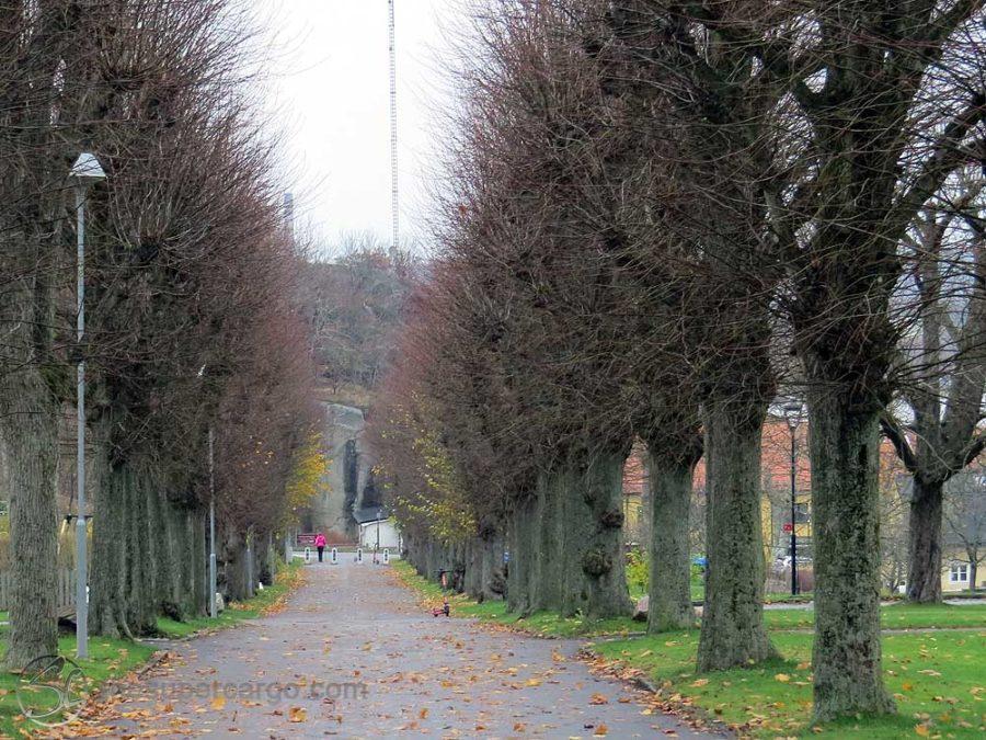 Muted autumn: An avenue of autumn bare, pollarded trees