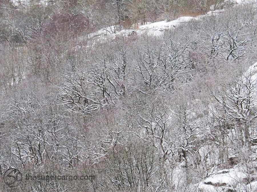 Suddenly a snowfall and bare winter branches are sketched in charcoal and chalk