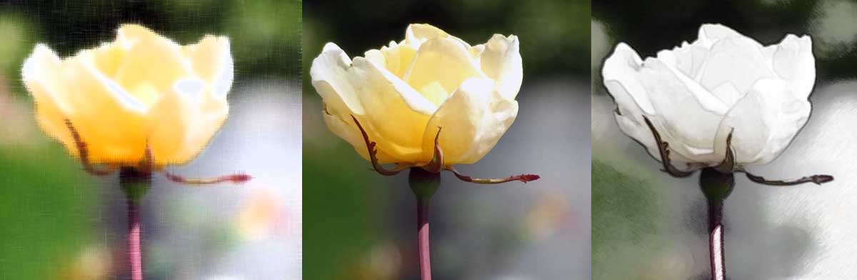 Life is a rose header