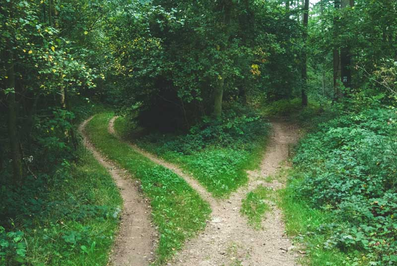 Tipping point: two paths in a wood