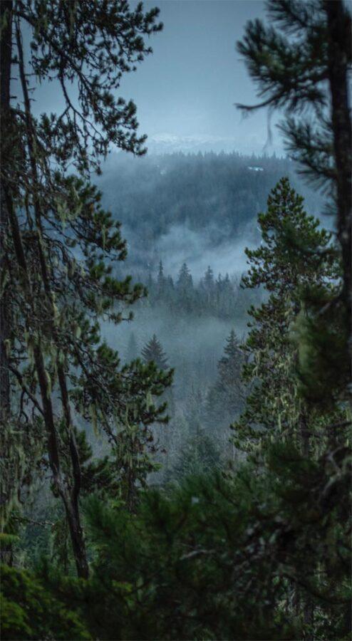 Autumn Haunted Cinquain: Misty forest